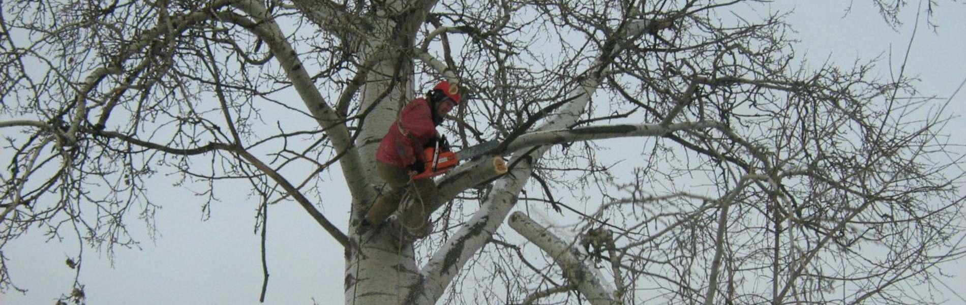 Обрезка аварийных деревьев в Одесса